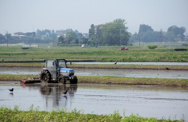 田んぼのトラクター代掻き方法・手順・使い方、メリットデメリットなどについて