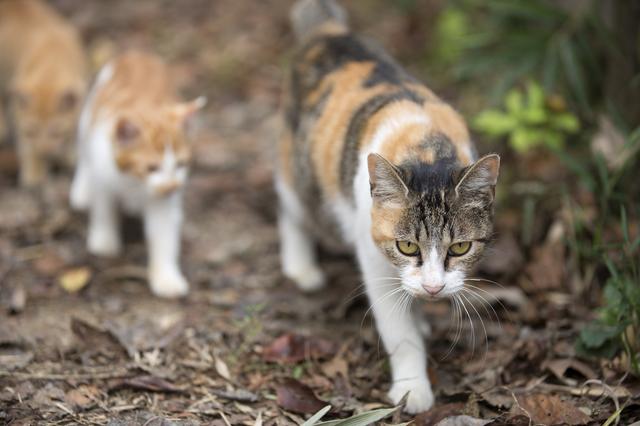 猫退治の方法・やり方・手順や使い方・流れなどについて