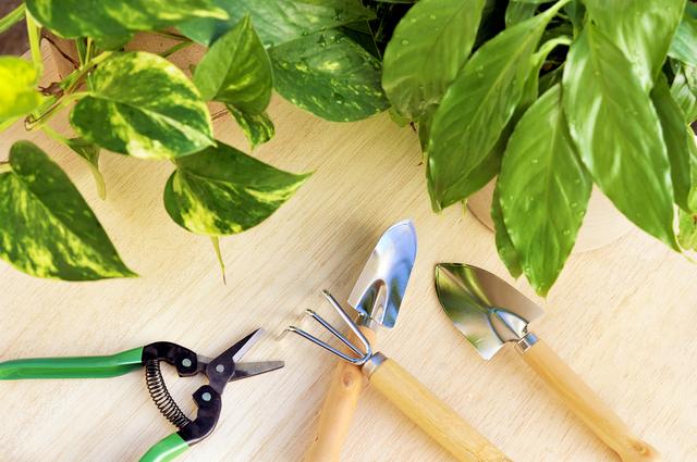 観葉植物植え替えの方法・やり方・手順や使い方