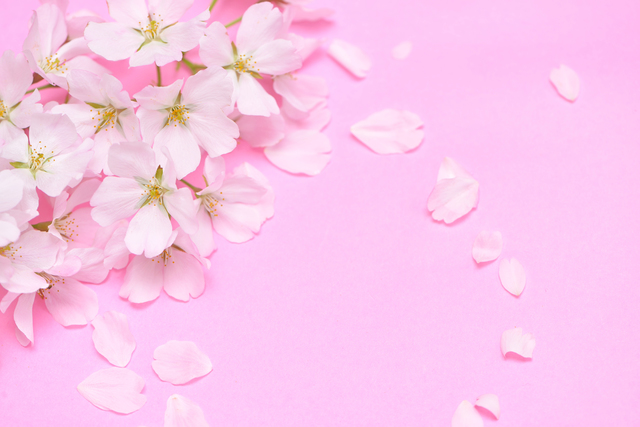 桜染めの方法・やり方・手順や使い方