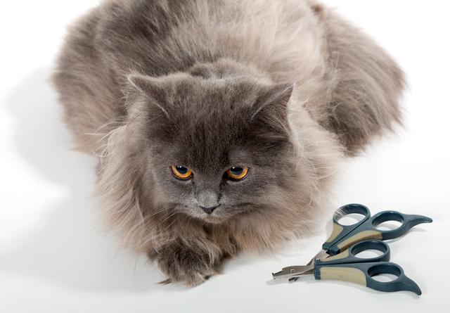 猫のサマーカットの方法・やり方・手順や使い方