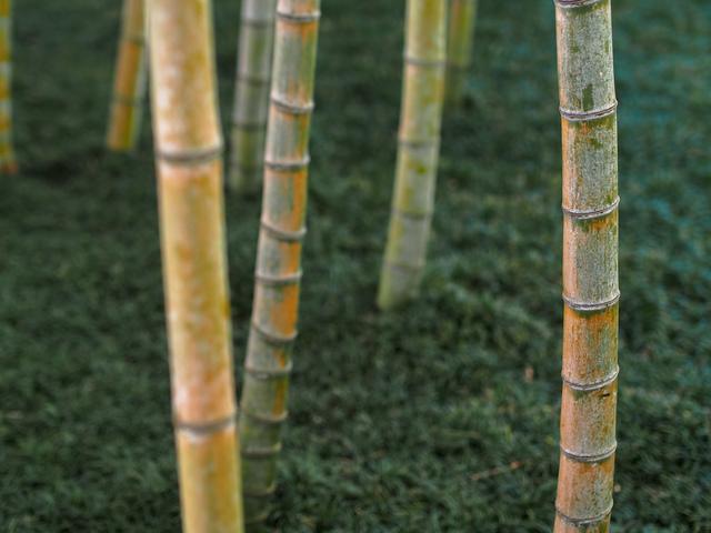 竹退治の方法・やり方・手順や使い方