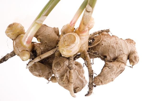 生姜の芽出しの方法・やり方・手順や使い方