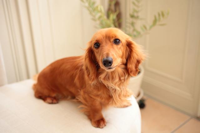 犬のトリミングの方法・やり方・手順や使い方・流れなどについて